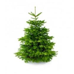 Nordman kerstboom 1,80
