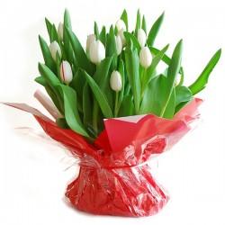 Witte Tulpen met bol in zak