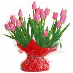 Rose Tulpen met bol in zak