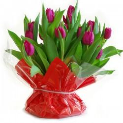 Paarse Tulpen met bol in zak