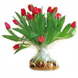 Rode Tulpen met bol in zak