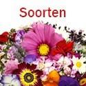 Soort Bloemen