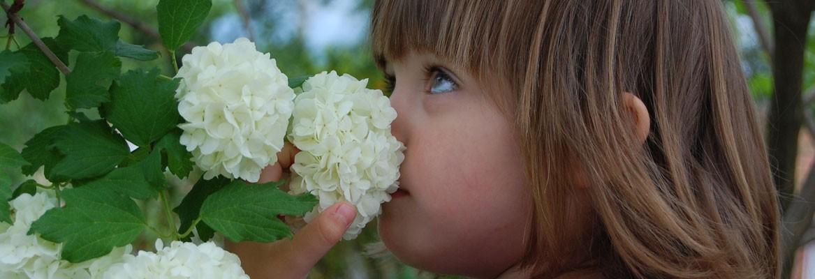 bloemen kleuren je leven